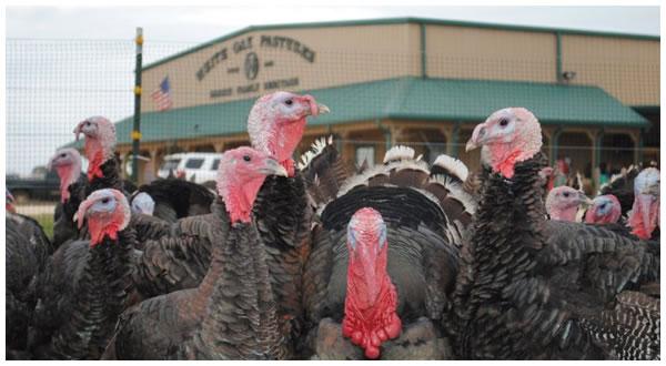 turkey-placeholder_01