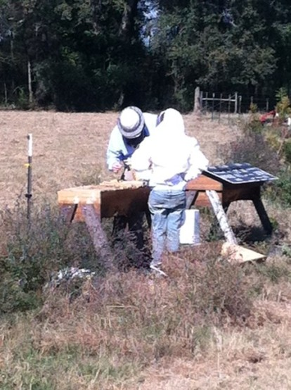 Examining hives
