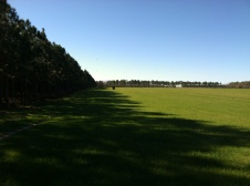 Green pasture in January