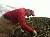 Ryan inspecting the beets