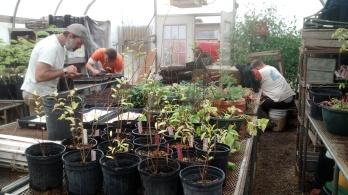Valiantly planting kale