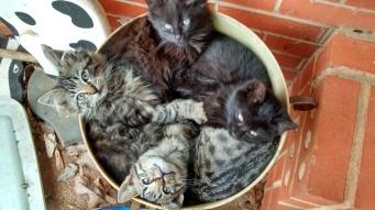 Pot O' Kittens