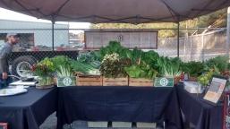 Albany Farmers Market