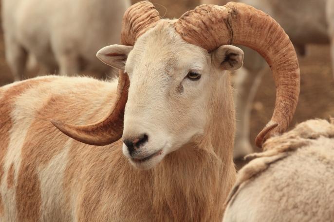 White Oak Pastures Kathie Entz (4)