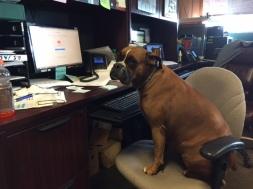 Regal at desk