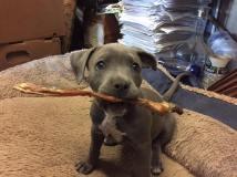 Roxi and pet chew